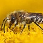 Insektenschutz Artenvielfalt
