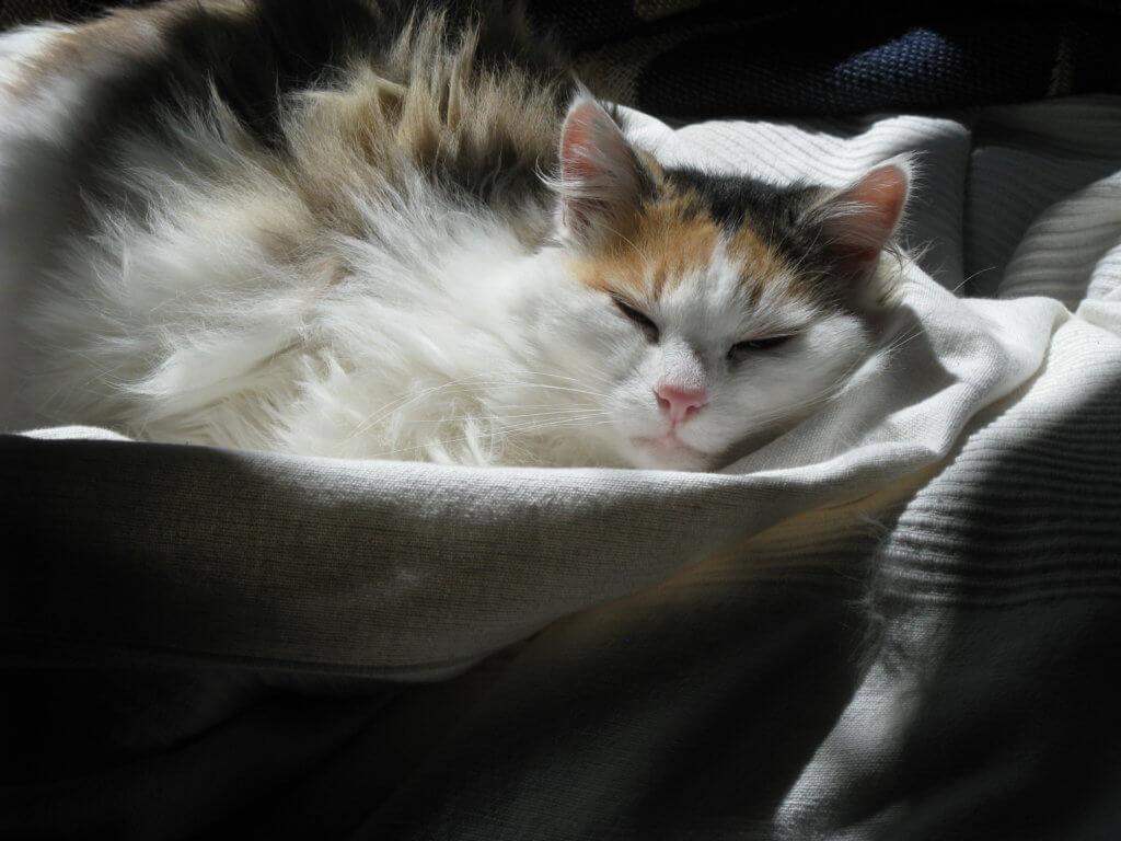Katzensicherung