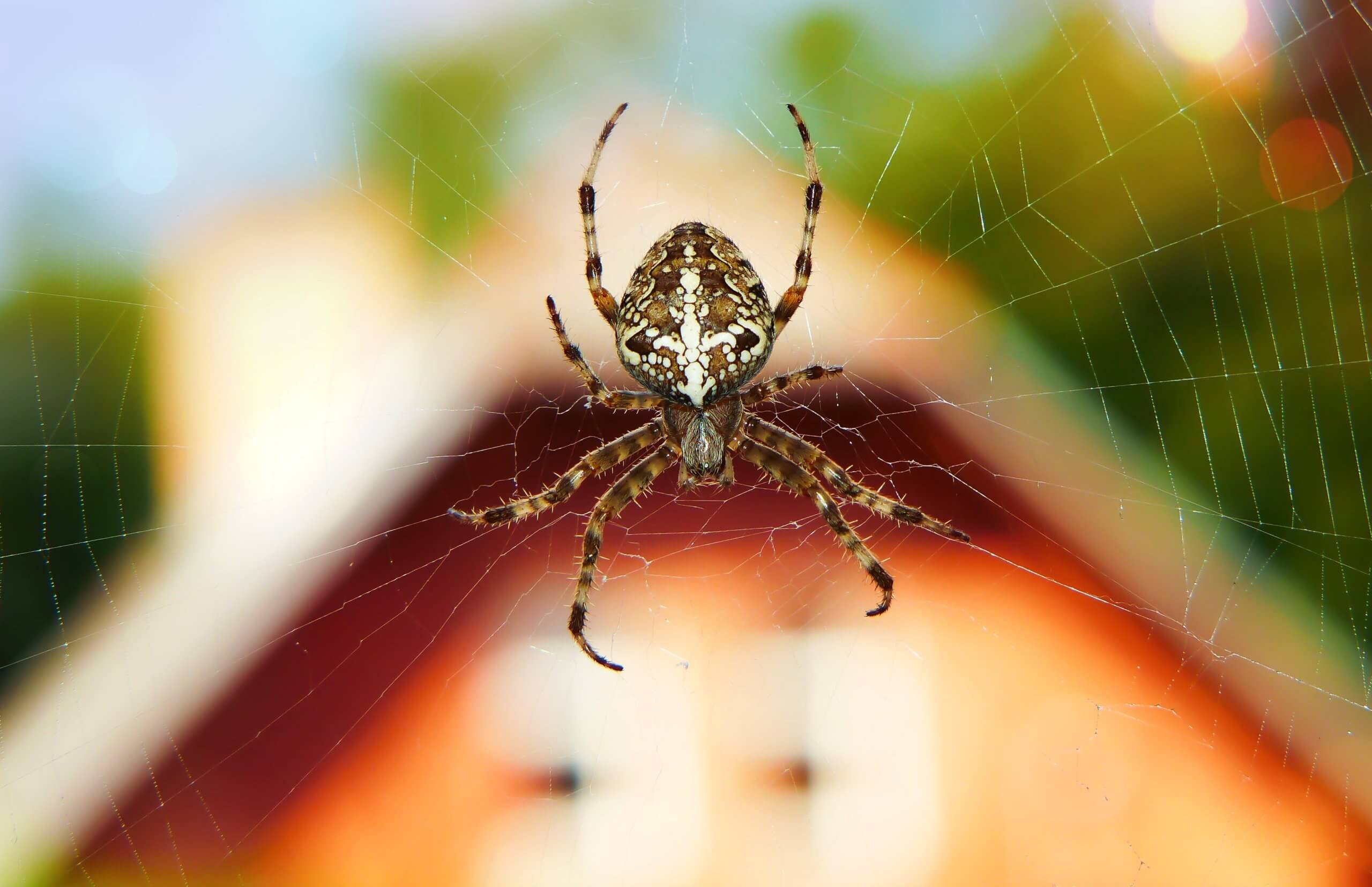 spinnenbekaempfung-im-haus-01