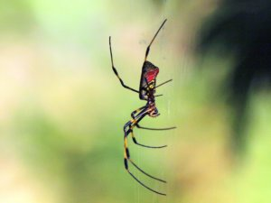 Spinnweben, Spinnennetze